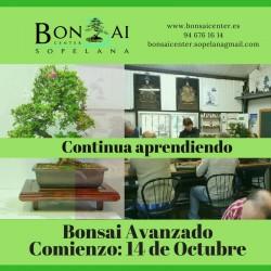Curso Avanzado de Bonsai 2017-2018