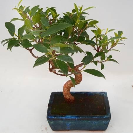 Maceta semesfera marrón jaspeado