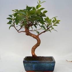 Maceta de bonsai marrón y verde con patas