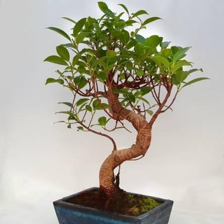 Maceta de bonsai marrón y verde con patas