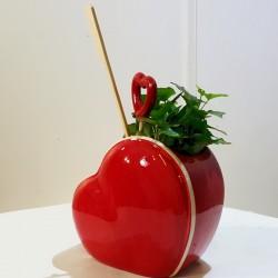Kokedama Hiedra en maceta corazón rojo lisa