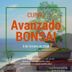 CURSO AVANZADO DE BONSAI