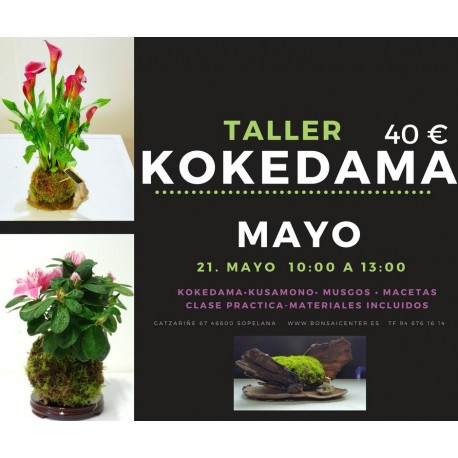 Taller de Kokedama 17 de septiembre