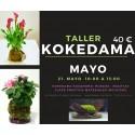 Taller de Kokedama