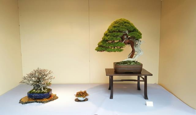 Bonsai, Ichigo ichie.