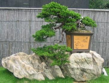 Mirar y Ver Bonsai (2)
