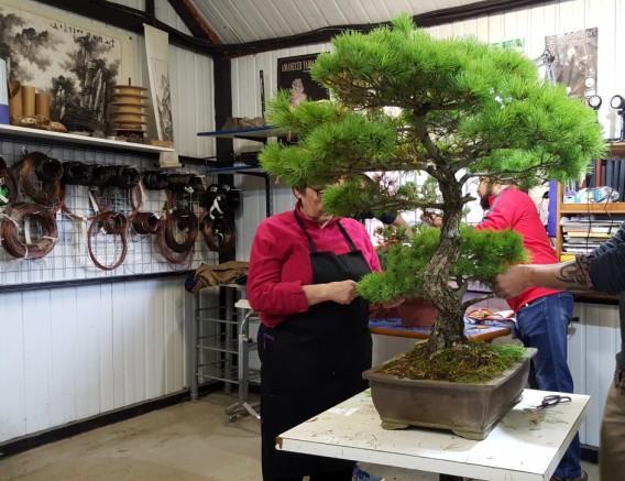 Detalle de las clases de bonsai en bonsai center sopelana