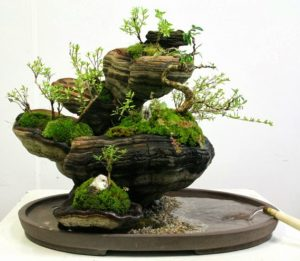 Penjing on a Fungus (2)