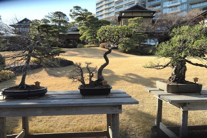 bonsai bilbao bonsai bizkaia