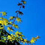 Estragos de verano, soluciones para tu bonsai.