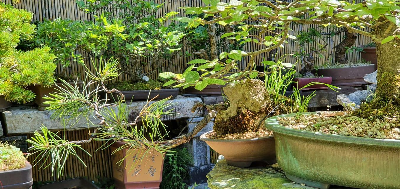 Dime donde vives y te diré que bonsai es mas adecuado.