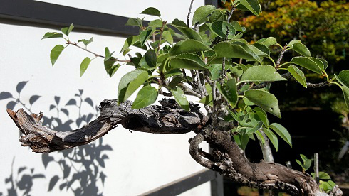 Bonsai Center Sopelana Beti Andres