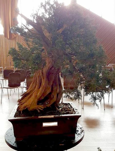 bonsai center sopelana