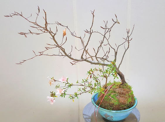 cursos de kokedama y talleres de bonsai en Bilbao