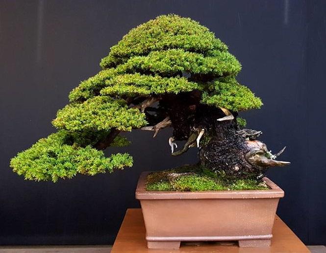 Bonsai Bilbao Bonsai center sopelana cursos bonsai bilbao