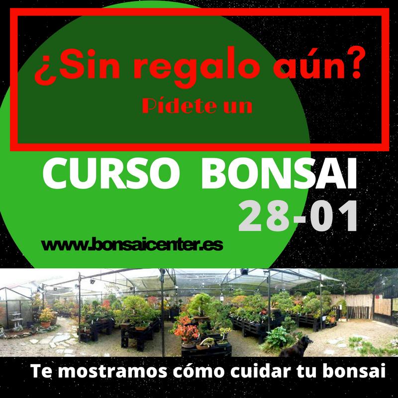 Bonsai center sopelana cursos y talleres de bonsai