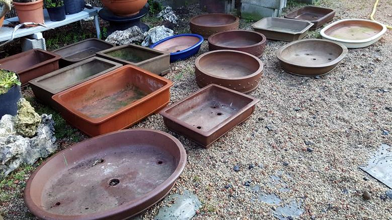 cursos y talleres de bonsai en bonsai center sopelana