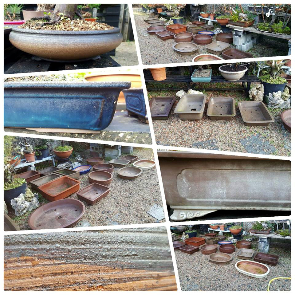 bonsai center sopelana cursos y talleres