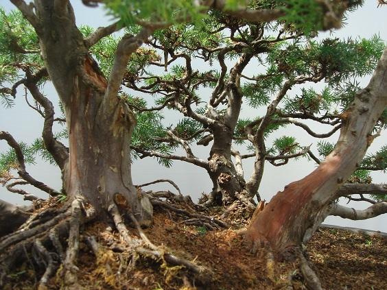 talleres y cursos de bonsai en Bilbao