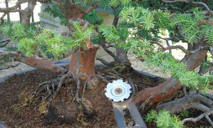 cursos y talleres de bonsai center sopelana bilbao