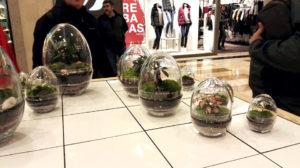 Ecosistemas de vidrio con Bonsáis