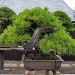 Ki no Kami, Los dioses en los árboles