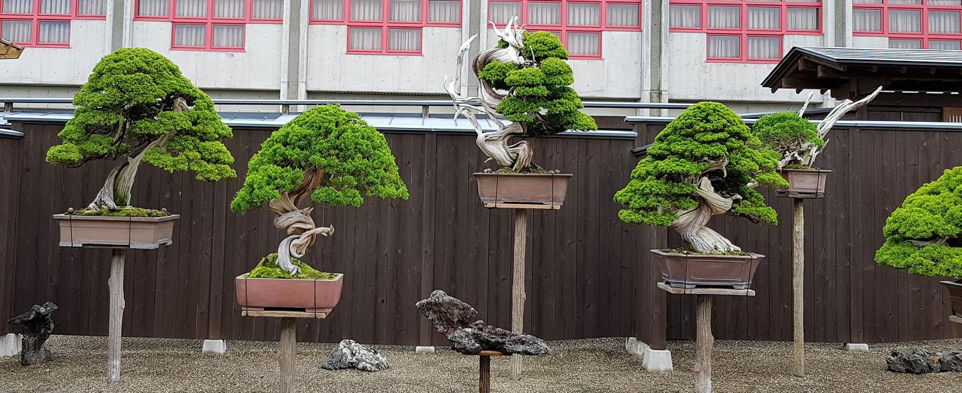 Taikan Bonsai: paraiso