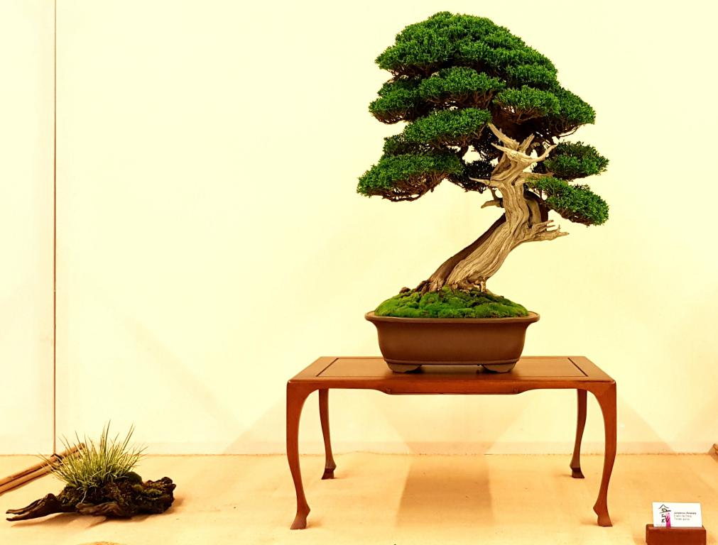 Bonsai Araba, expo bonsai 2018.