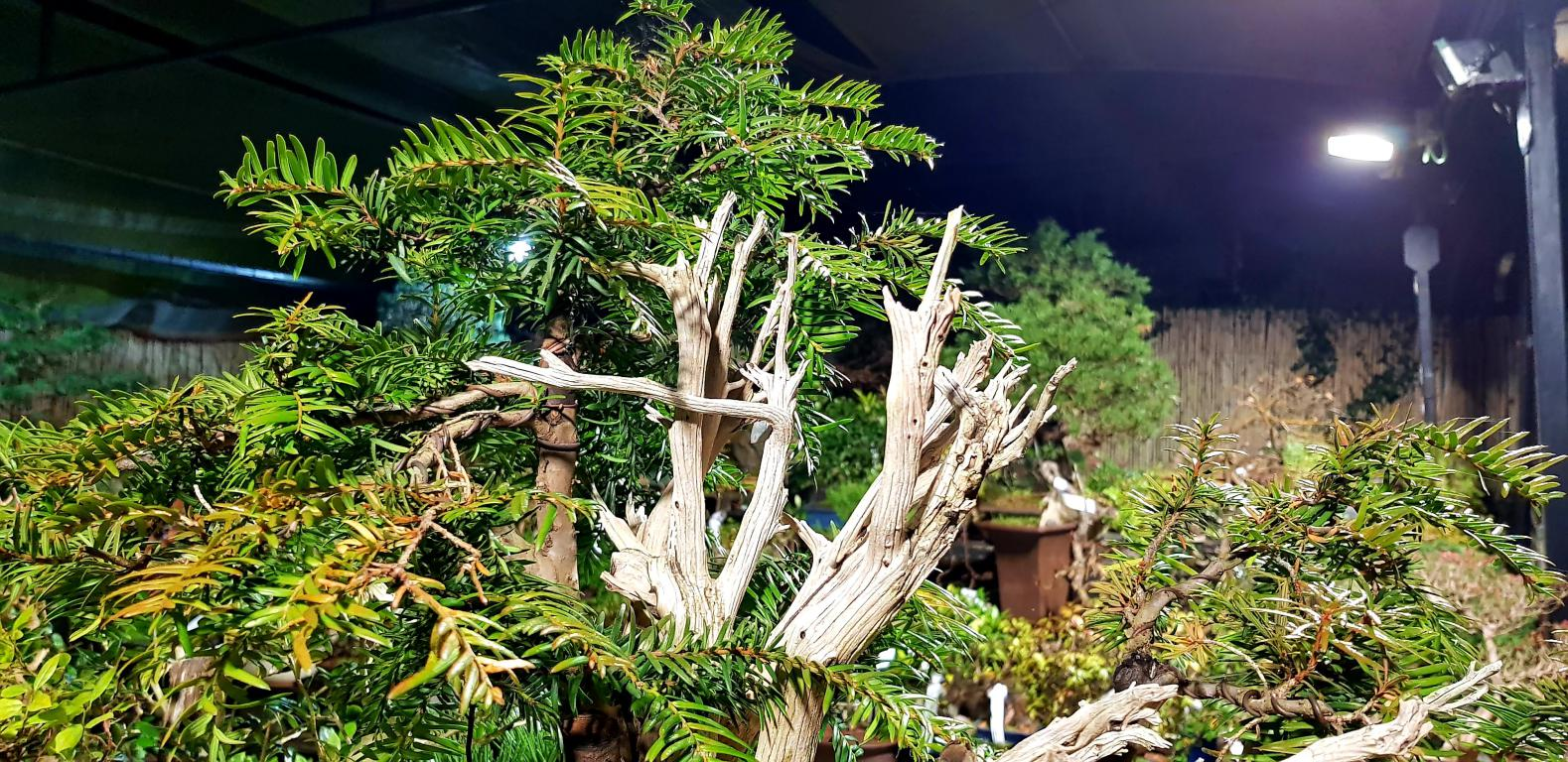 Video Bonsai Center.