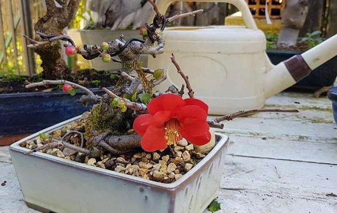 Más bonsáis en nuestra segunda importación.