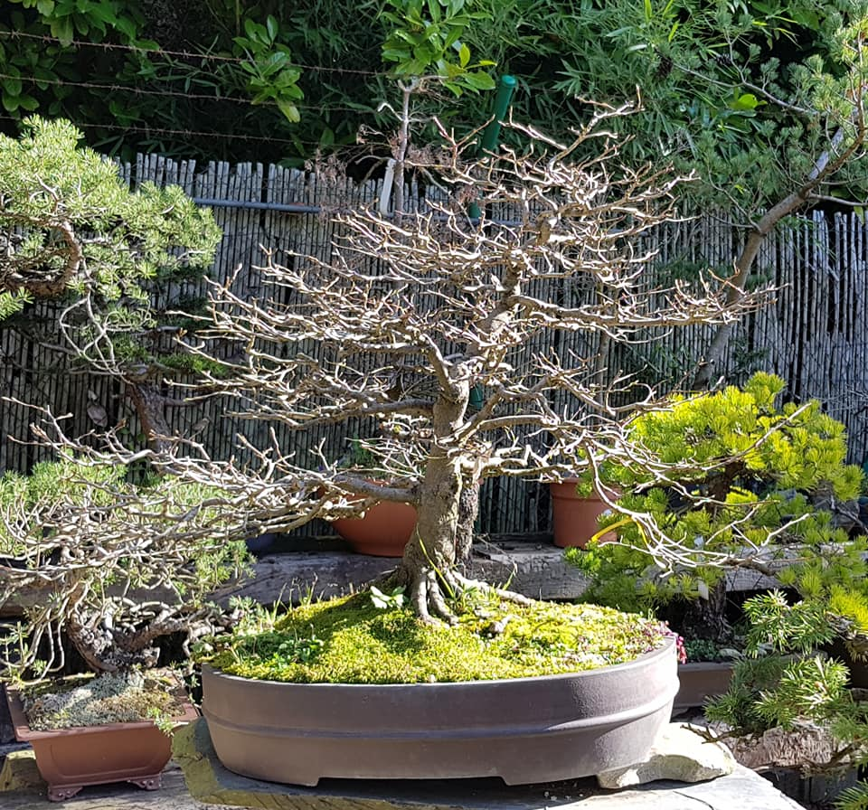 Bonsai. Higiene en Bonsai Center.