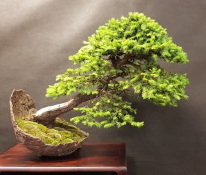 Expo Bonsai Albi, FFB y EBA