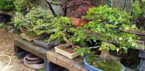 ¿Quién se come mi bonsái?: insectos