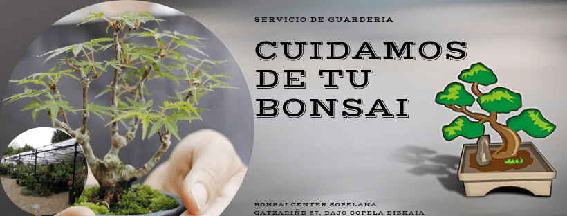 Guardería de Bonsais.