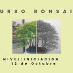 Iniciación al Bonsai. Curso octubre 2019