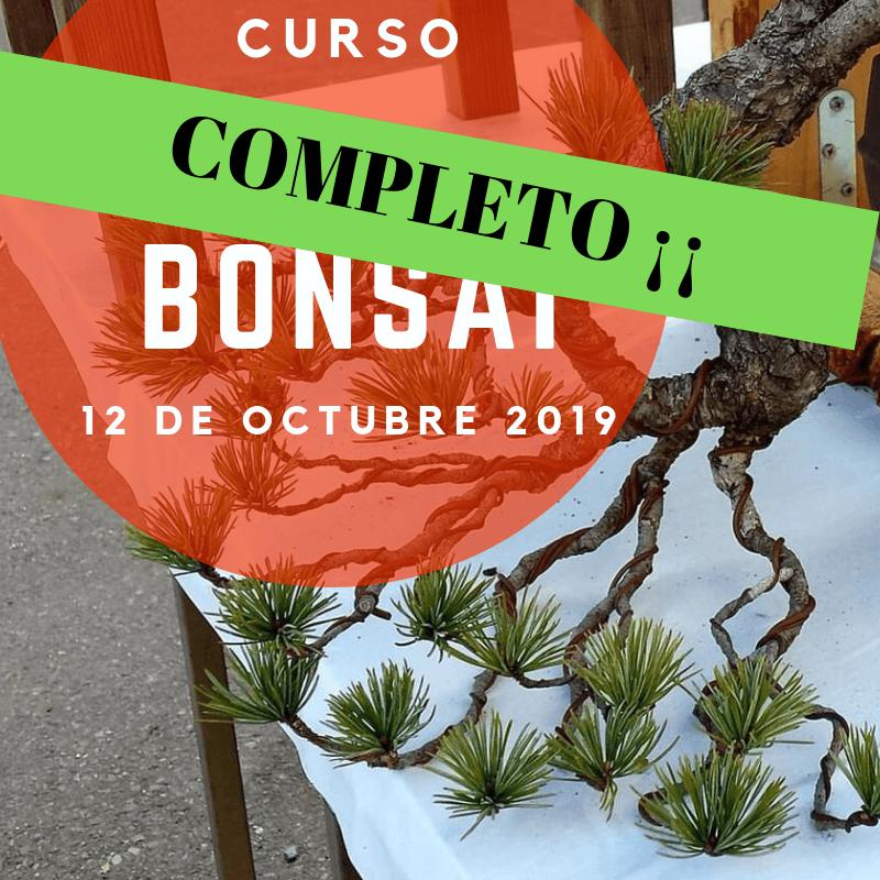 Mi primer curso de Bonsai.