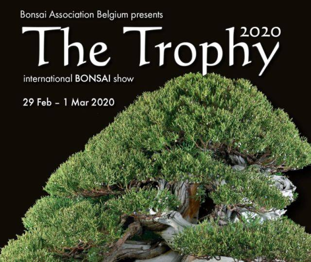 TROPHY BONSAI 2020