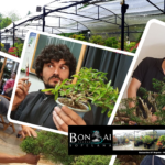 Primavera Top en Bonsai Center Sopelana.