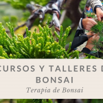Los beneficios de practicar bonsai.