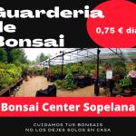 Servicio de Guarderia de Bonsais